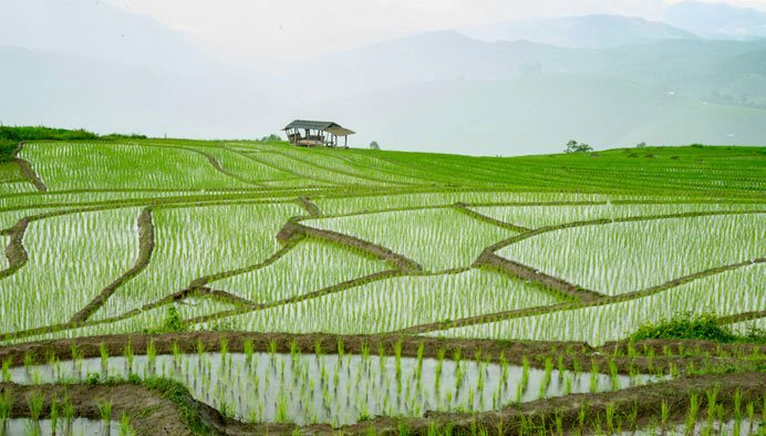 Doi Inthanon Rice paddies near Suan Sook Boutique Homestay Bed and Breakfast