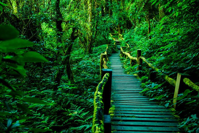 Ang Ka Walkway, Doi Inthanon during a 5 day photography workshop