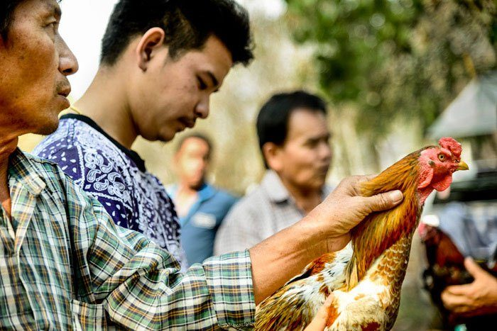Suan Sook Homestay photo workshops Market Chicken Buying